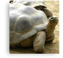 I Like Turtles! Canvas Print