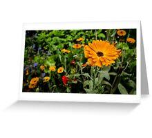 Garden Collection - Dahlia 4? Greeting Card