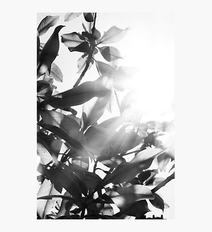 Sunny leaves Photographic Print