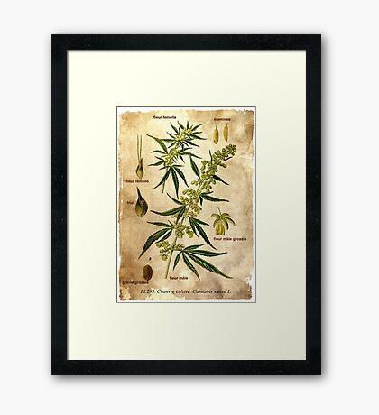 Marihuana plant Framed Print