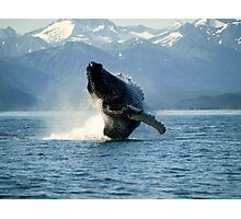 Breaching Whale Photographic Print