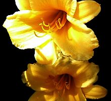 Sunshine Bright Daylilies by Rosemary Sobiera