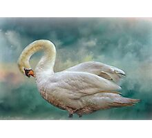 Silver Swan Photographic Print