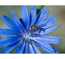 Summer time flower and bee Photographic Print
