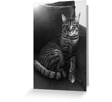 Serious Cat Greeting Card