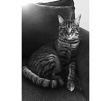 Serious Cat Photographic Print
