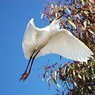 Snowy Egret by loiteke