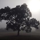 Canberra fog by Tom McDonnell