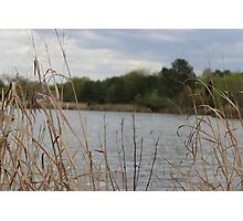 maryland grasses by the bay Photographic Print