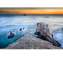 Muriwai Beach - Auckland - NZ Photographic Print