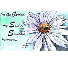 Country Diary - In the garden, my soul is sunshine Photographic Print