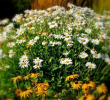 August Daisies by goddarb