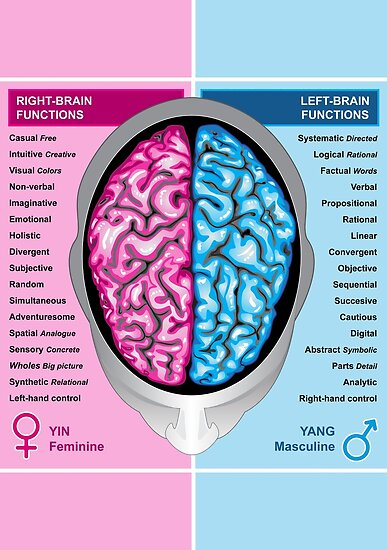 Human brain left and right functions vector by Medusa81