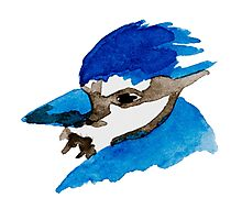Blue Jay Watercolor Photographic Print