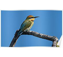 Rainbow Bee Eater Poster