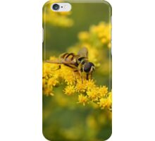 hoverfly feeding iPhone Case/Skin