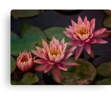 Trio of pink lilies Canvas Print