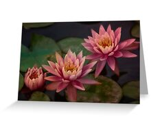 Trio of pink lilies Greeting Card