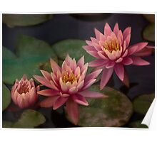 Trio of pink lilies Poster