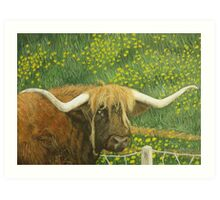 Highland cow and dandelions Art Print