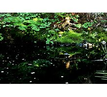 In the Deep, Dark, Green Wood  Photographic Print