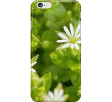 White Stellaria Media Flowers iPhone Case/Skin