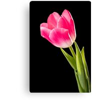 Red Tulip on Black Background Canvas Print