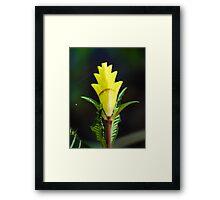 Zebra Plant Framed Print