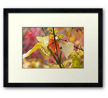 Ladybird on a leaf Framed Print