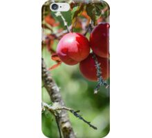 Plum harvest iPhone Case/Skin
