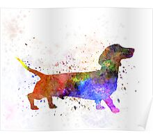 Short Haired Dachshund 01 in watercolor Poster