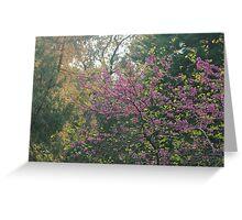 Judas tree in bloom Greeting Card