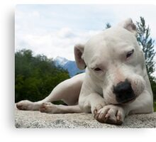 I LOVE MY DOGS_7 Canvas Print