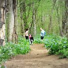 Hiking amongst the Bluebells by Bine