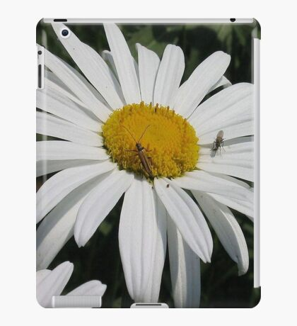 Close Up Common Daisy with Winged Insects iPad Case/Skin