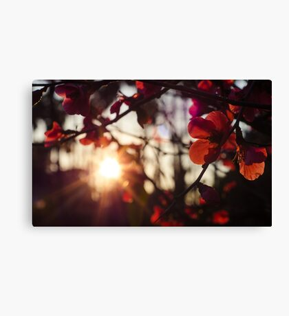 Golden Days Canvas Print