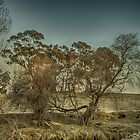 Foggy Start Country NSW by Kym Bradley