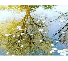 Flower Reflection Photographic Print