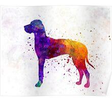 Great Dane 01 in watercolor Poster