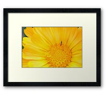Insect on Calendula Framed Print