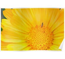 Insect on Calendula Poster