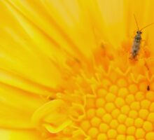 Insect on Calendula Sticker