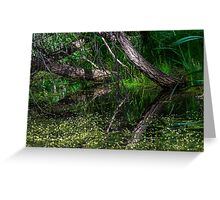 Pond Reflections of Peace and Serenity Greeting Card