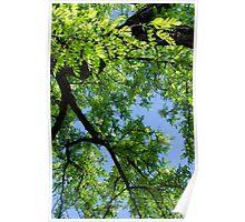 Green Skies  Poster