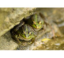 Pair of Iberian Green Frogs Photographic Print