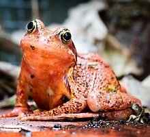 Colourful Frog by Geoff Carpenter