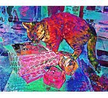 Cats Like Christmas Too Photographic Print