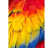 Feathers of A Scarlet Macaw Photographic Print