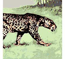 cat walk Photographic Print