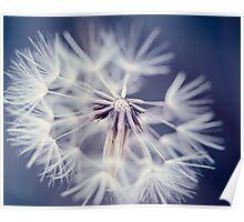 Blue Dandelion Poster